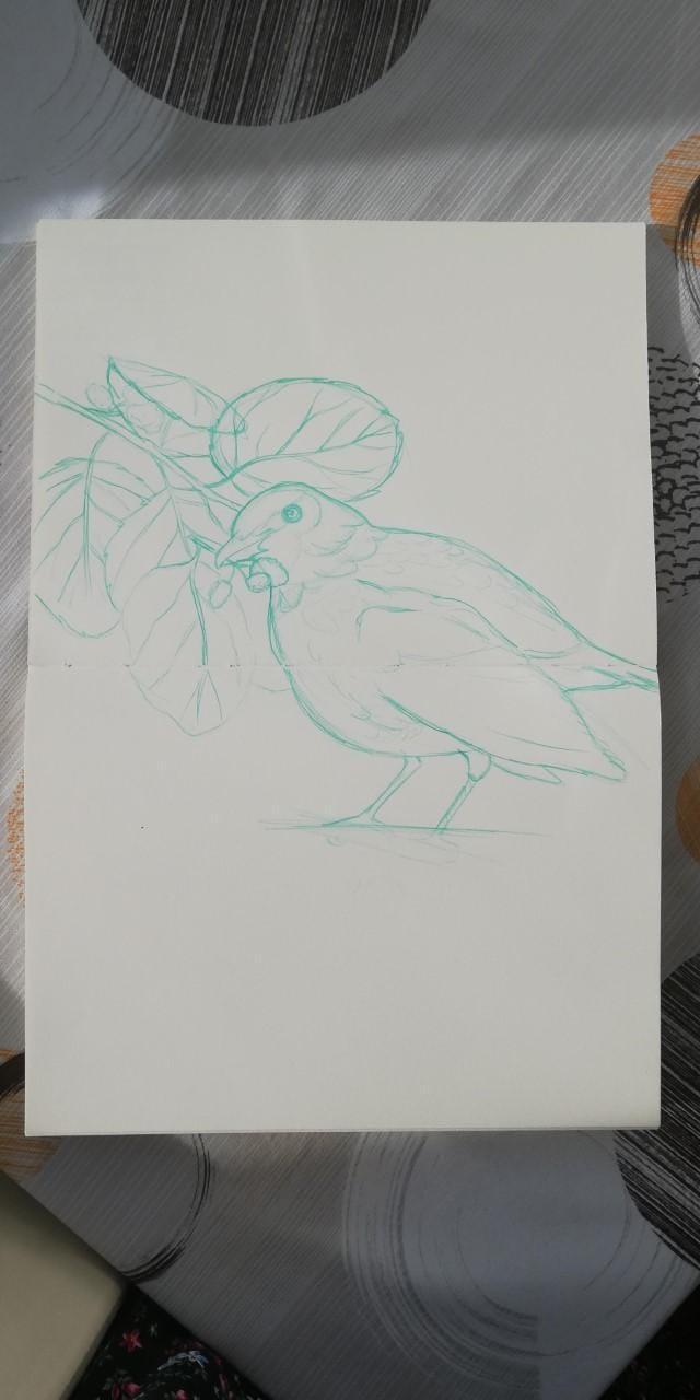 Mirlo bird - image 2 - student project
