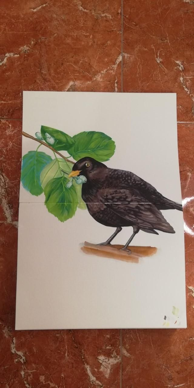 Mirlo bird - image 1 - student project