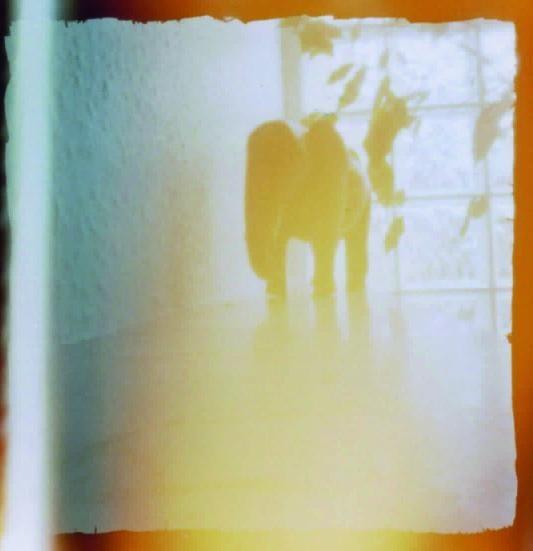 My first pinhole camera - image 7 - student project