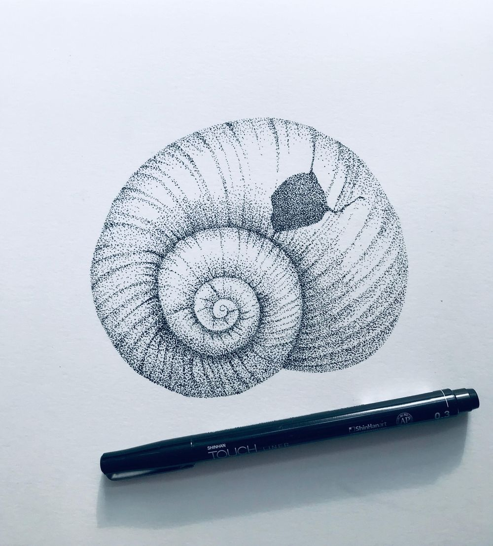 stippled shell - image 2 - student project