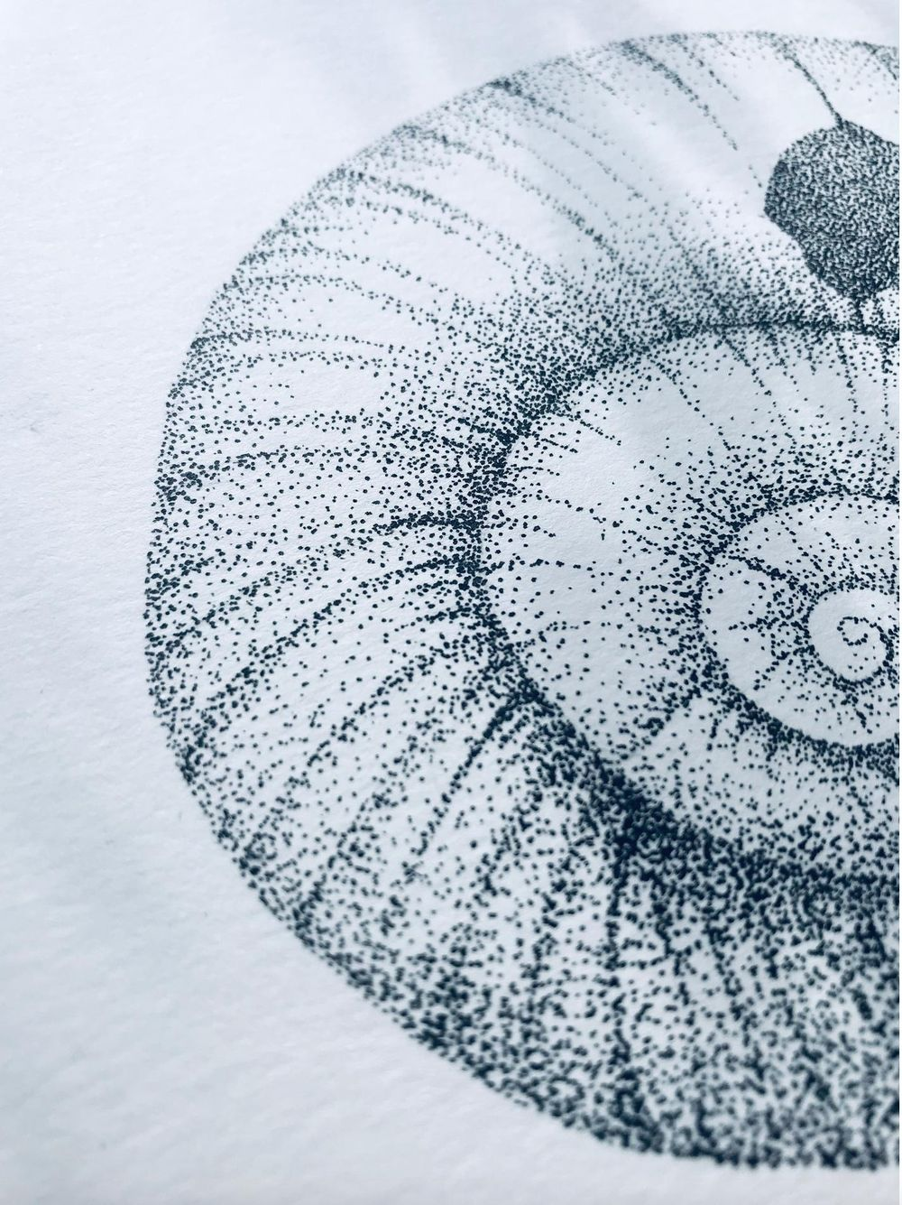 stippled shell - image 1 - student project