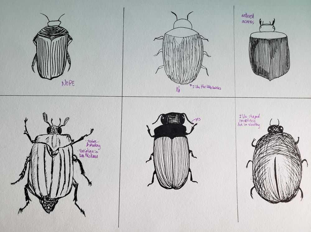 Beetles, Butterflies, and Broken Rules - image 1 - student project
