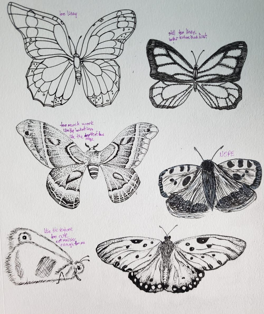 Beetles, Butterflies, and Broken Rules - image 2 - student project