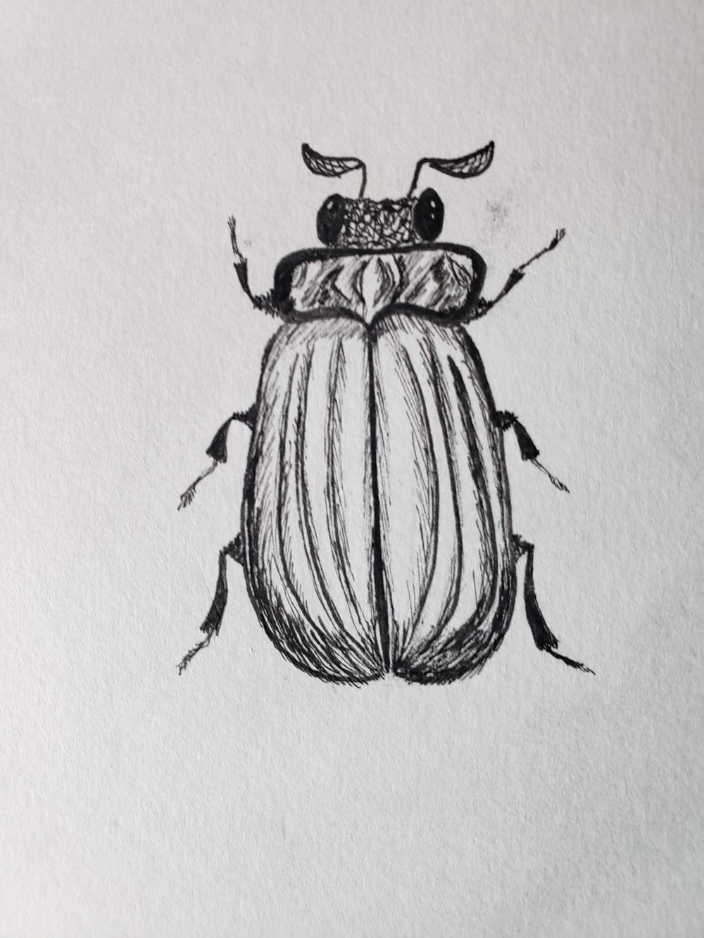 Beetles, Butterflies, and Broken Rules - image 3 - student project