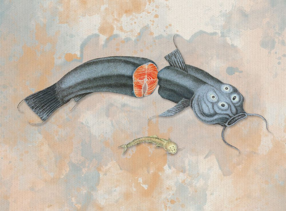 Surreal collage Fish Couvier 1834 - image 1 - student project
