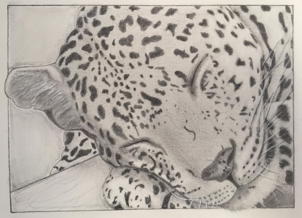 Cheetah - image 1 - student project