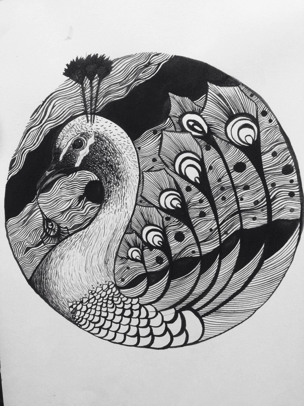 SEA PEACOCK - image 1 - student project