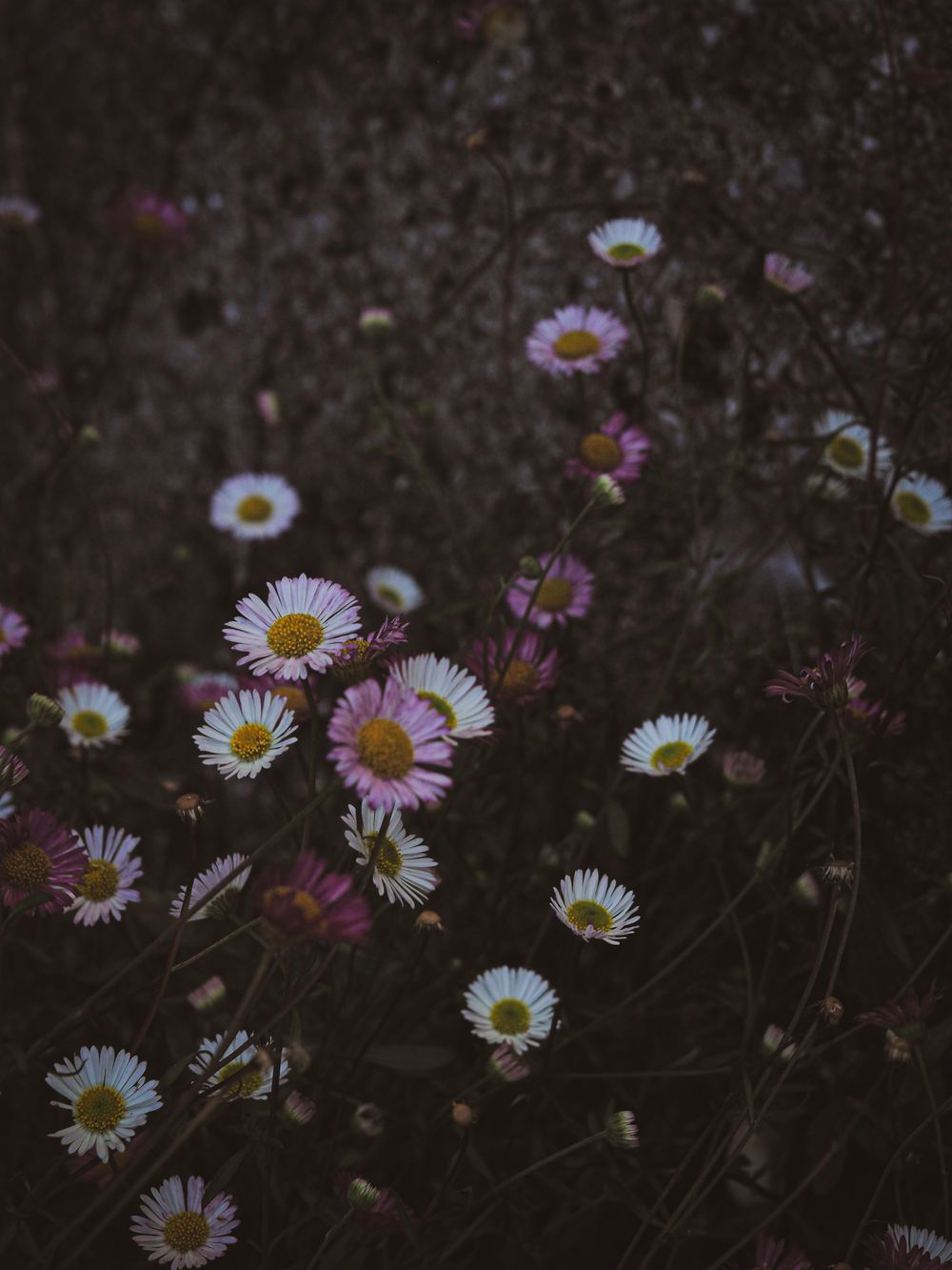 moody flowers - image 1 - student project