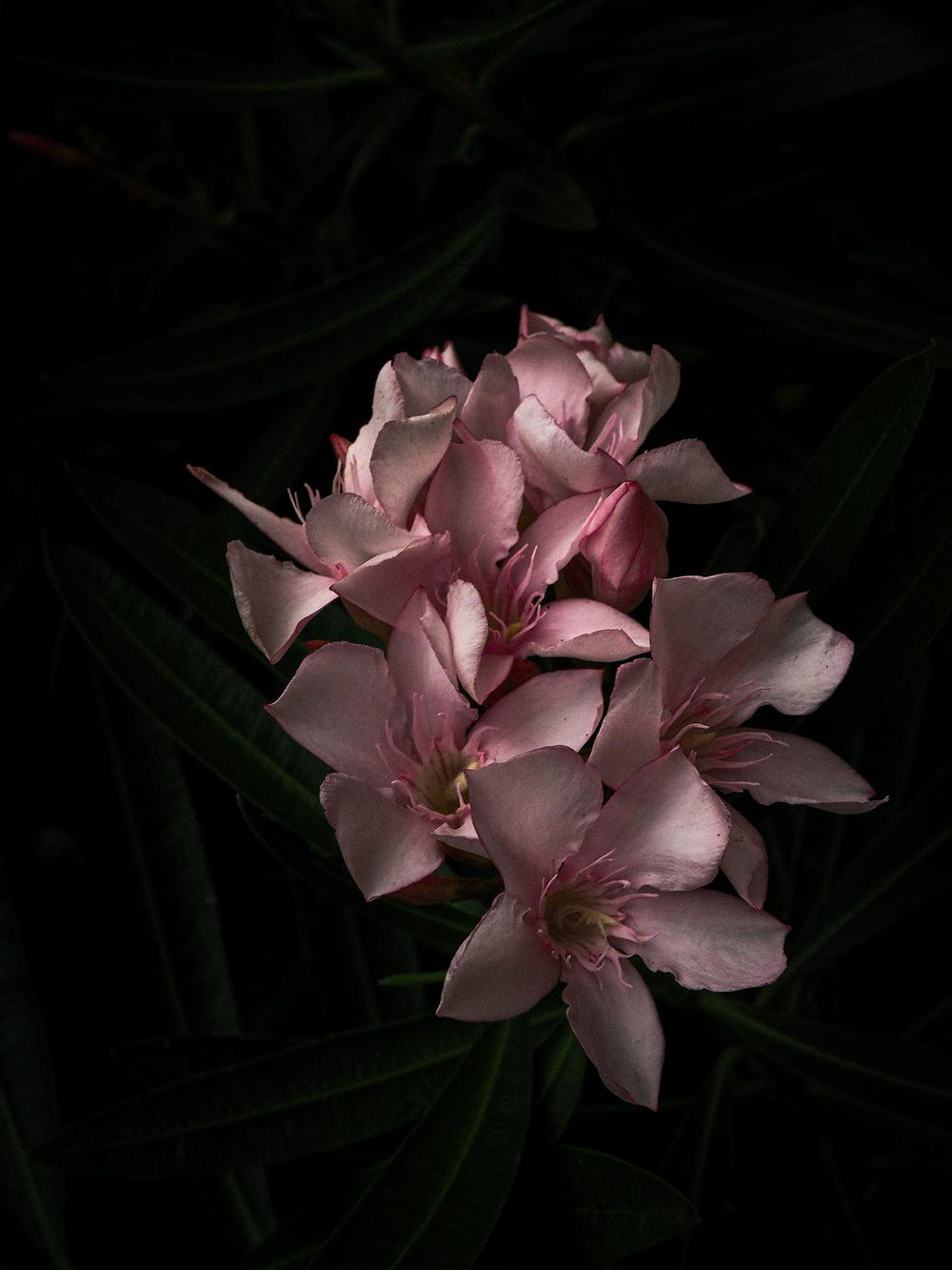 moody flowers - image 6 - student project