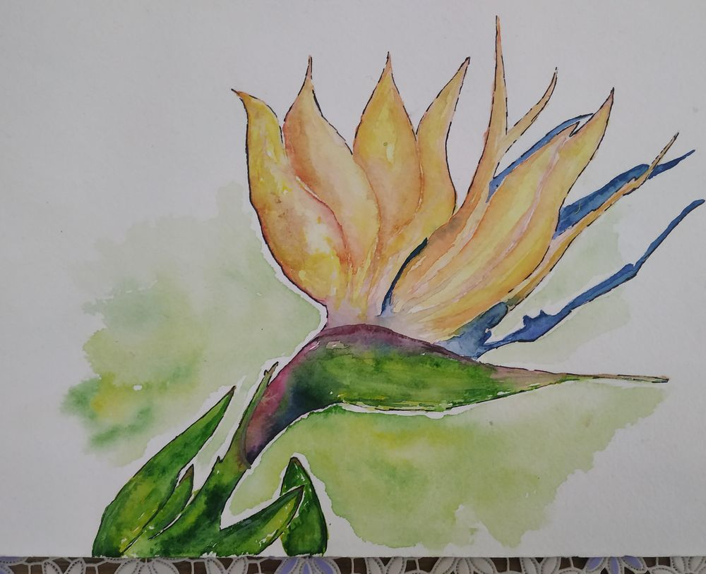 Birds Of Paradise - image 1 - student project
