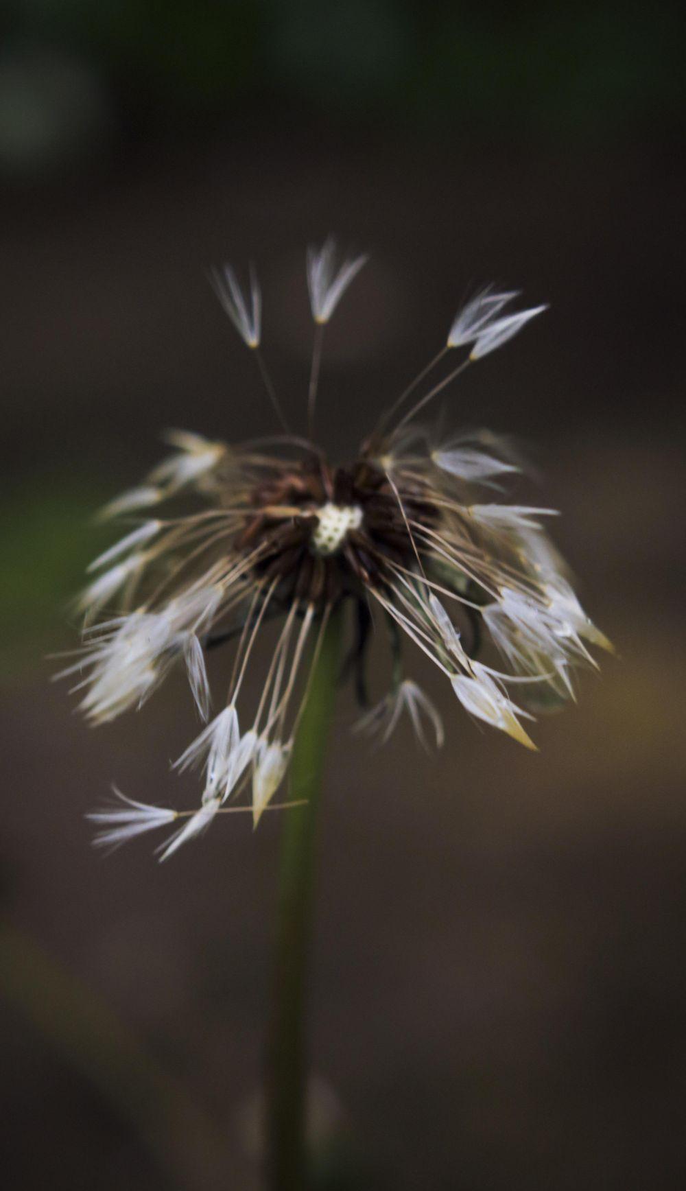 Dark & Moody Plants - image 3 - student project