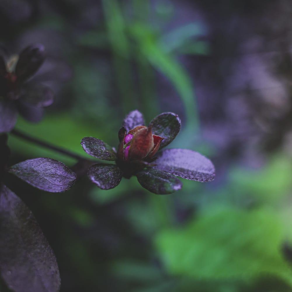 Dark & Moody Plants - image 1 - student project