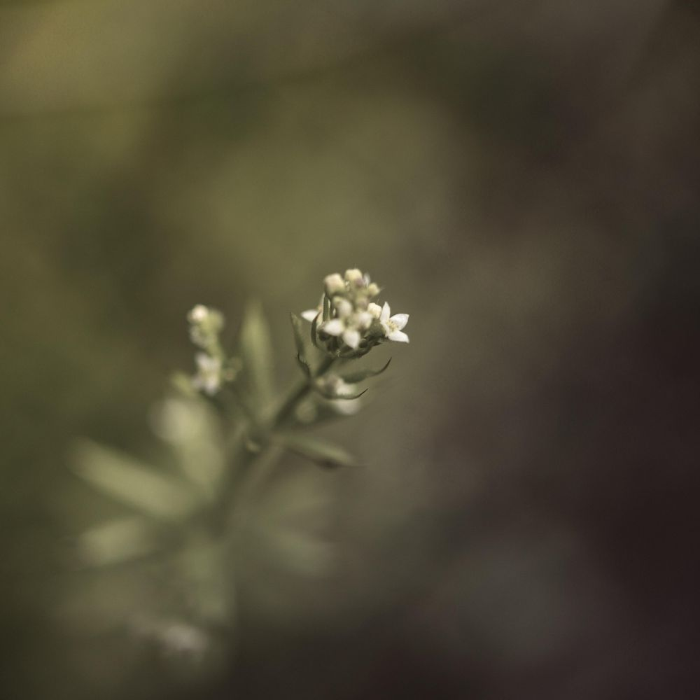 There is Beauty  in Simplicity - image 1 - student project