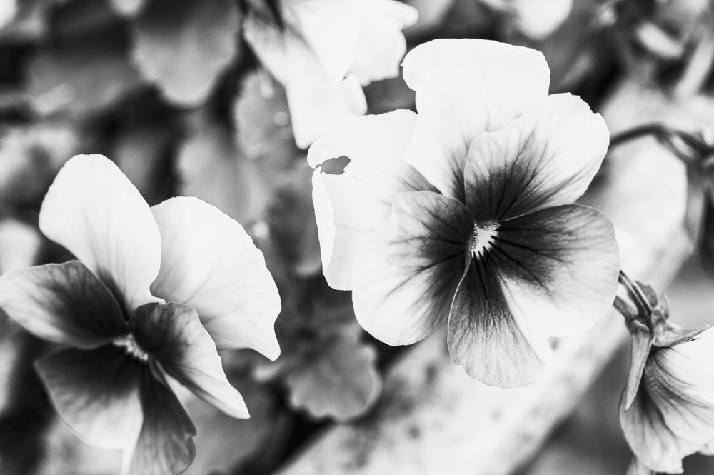 Black & White Mastery - image 1 - student project