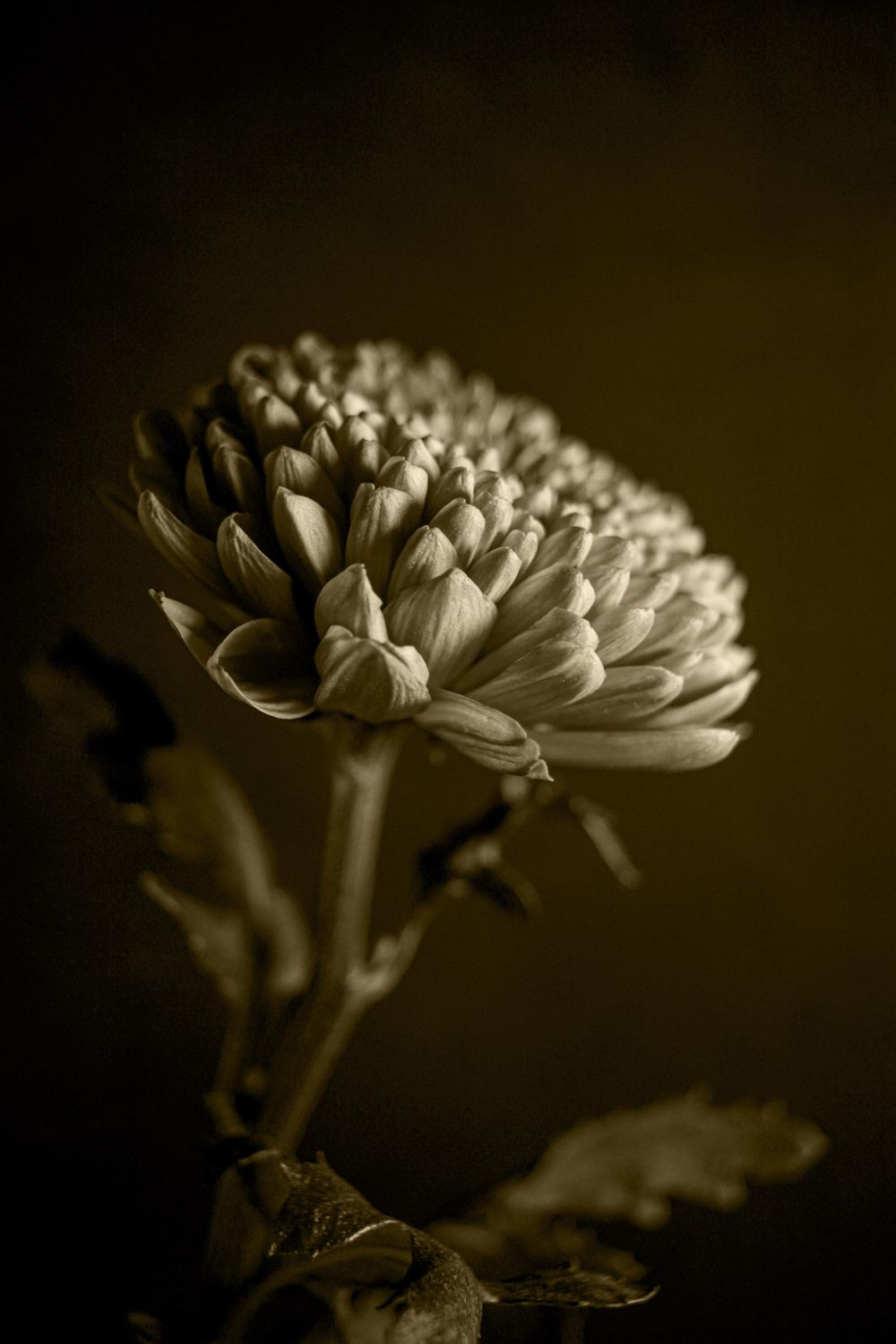 Black & White Mastery - image 2 - student project
