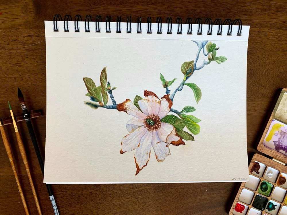 Wilting Magnolia - image 1 - student project
