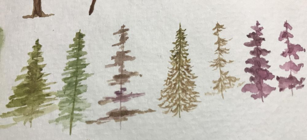 Pine Forest Scenes - image 1 - student project