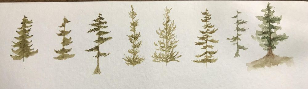 Pine Forest Scenes - image 2 - student project