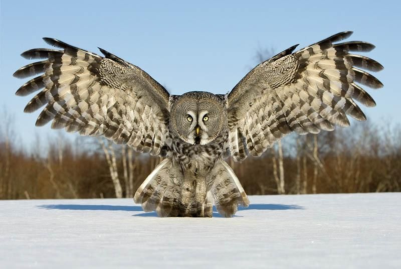 Owl - Fly By Night - image 1 - student project