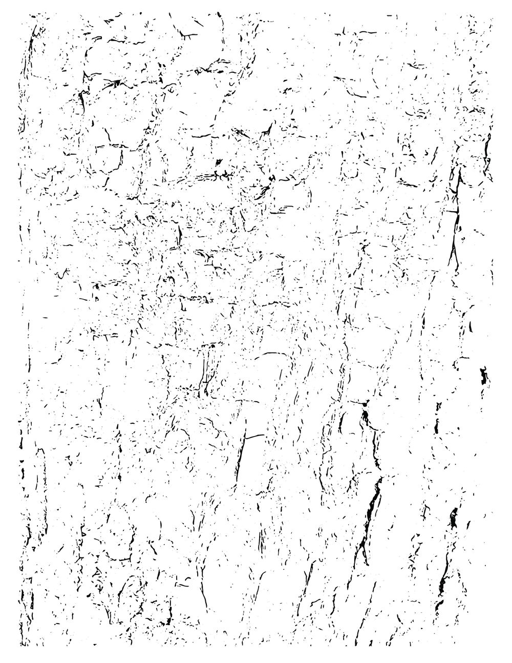 Tree Bark - image 1 - student project