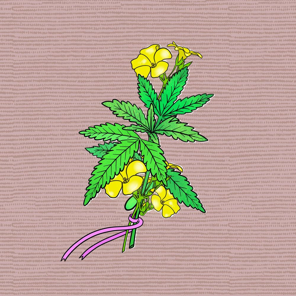 Botanical illustrations project - image 2 - student project