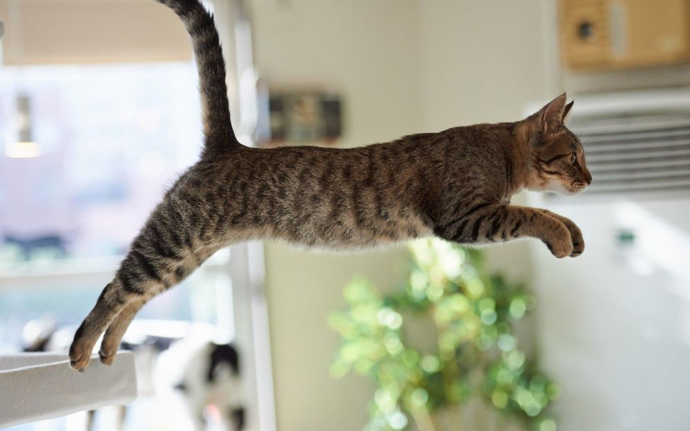 Jumping cat - image 1 - student project