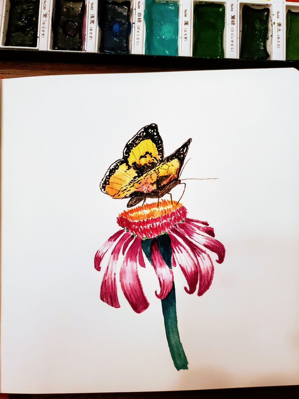 butterfly and echinacea - image 1 - student project