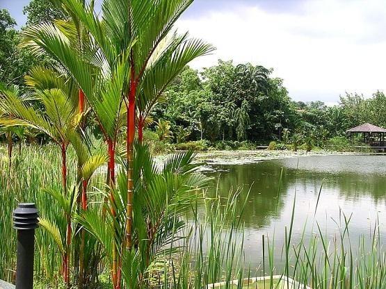 Botanical Garden - image 2 - student project