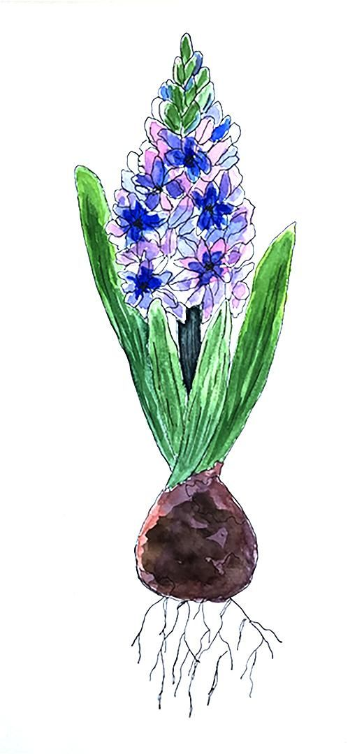 Spring Bulbs - image 2 - student project