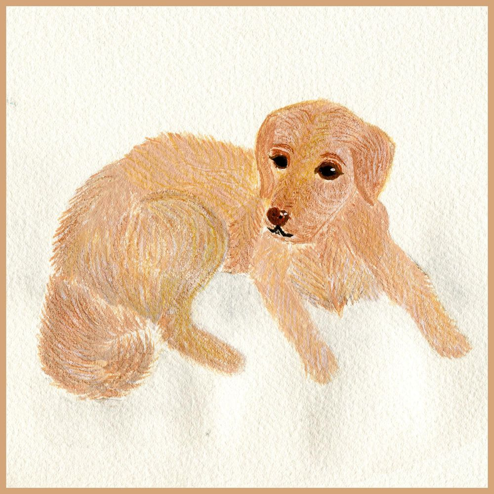 My first dog :) I had sooo much fun :):) - image 1 - student project