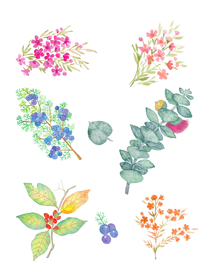 Flowers and leaves. - image 3 - student project
