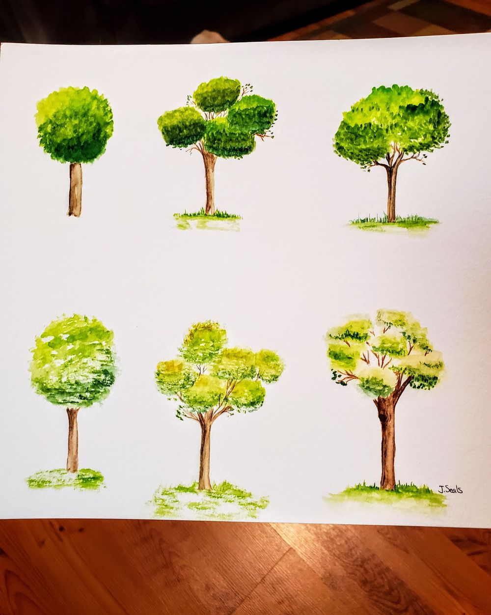 Trees, trees, and a few more trees :) - image 1 - student project