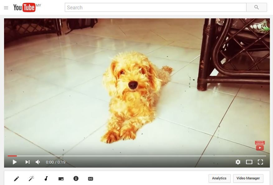 Smartphone Video - Cute Puppy - image 1 - student project