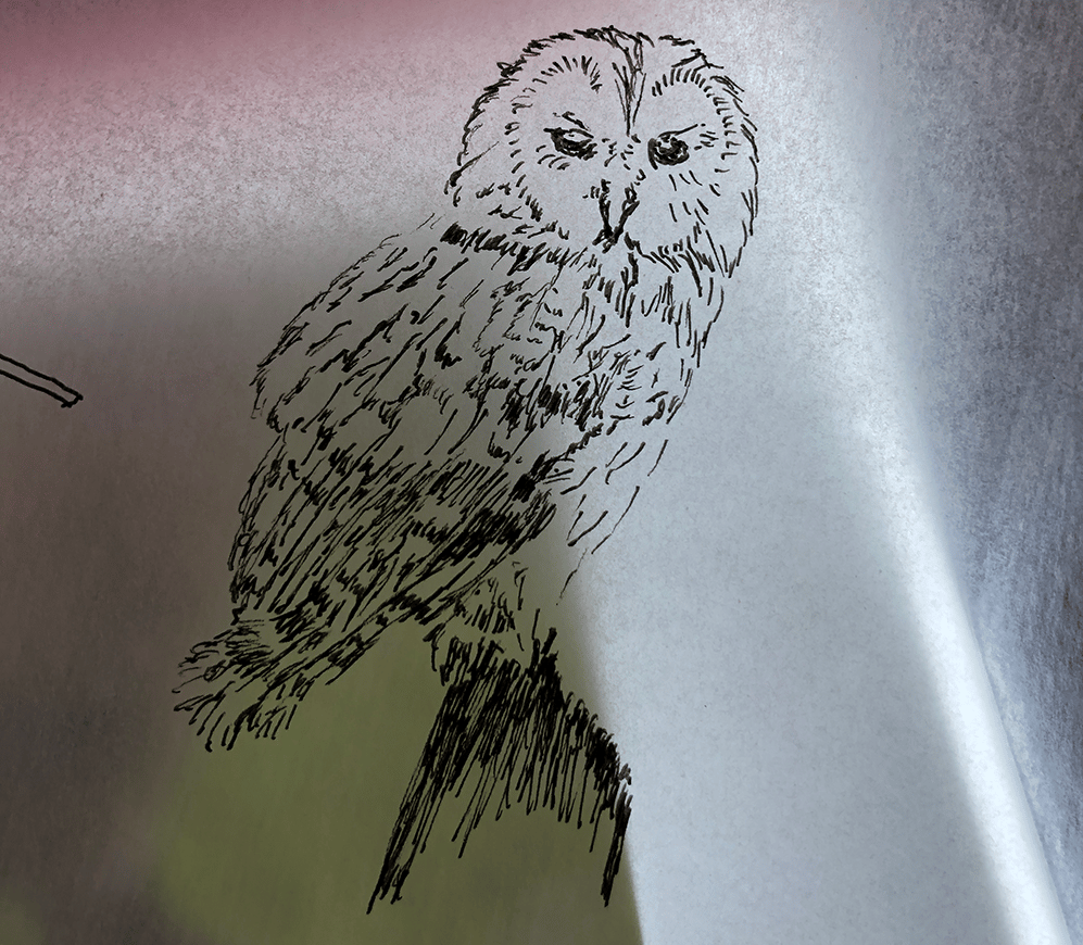 Playing with Owls - image 1 - student project