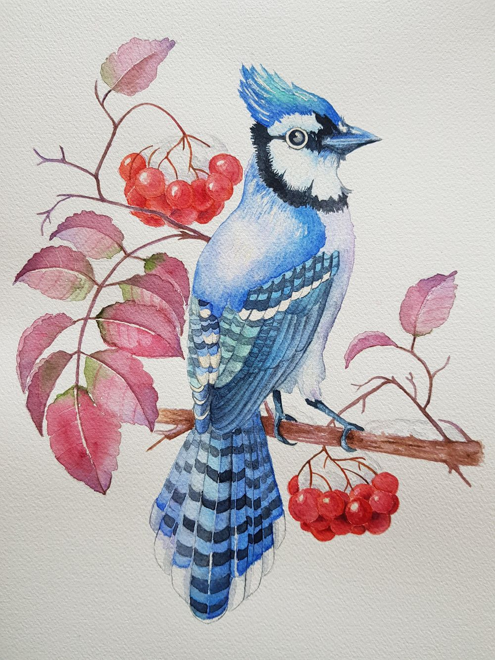 watercolor bluejay and rowan berries - image 1 - student project