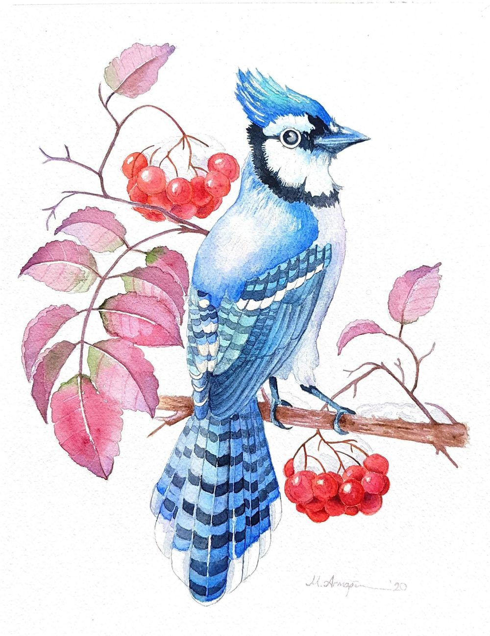 watercolor bluejay and rowan berries - image 2 - student project