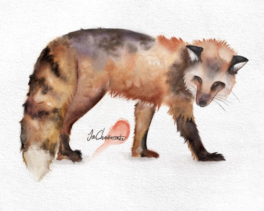Watercolour Fox (digital brushes in Procreate) - image 1 - student project