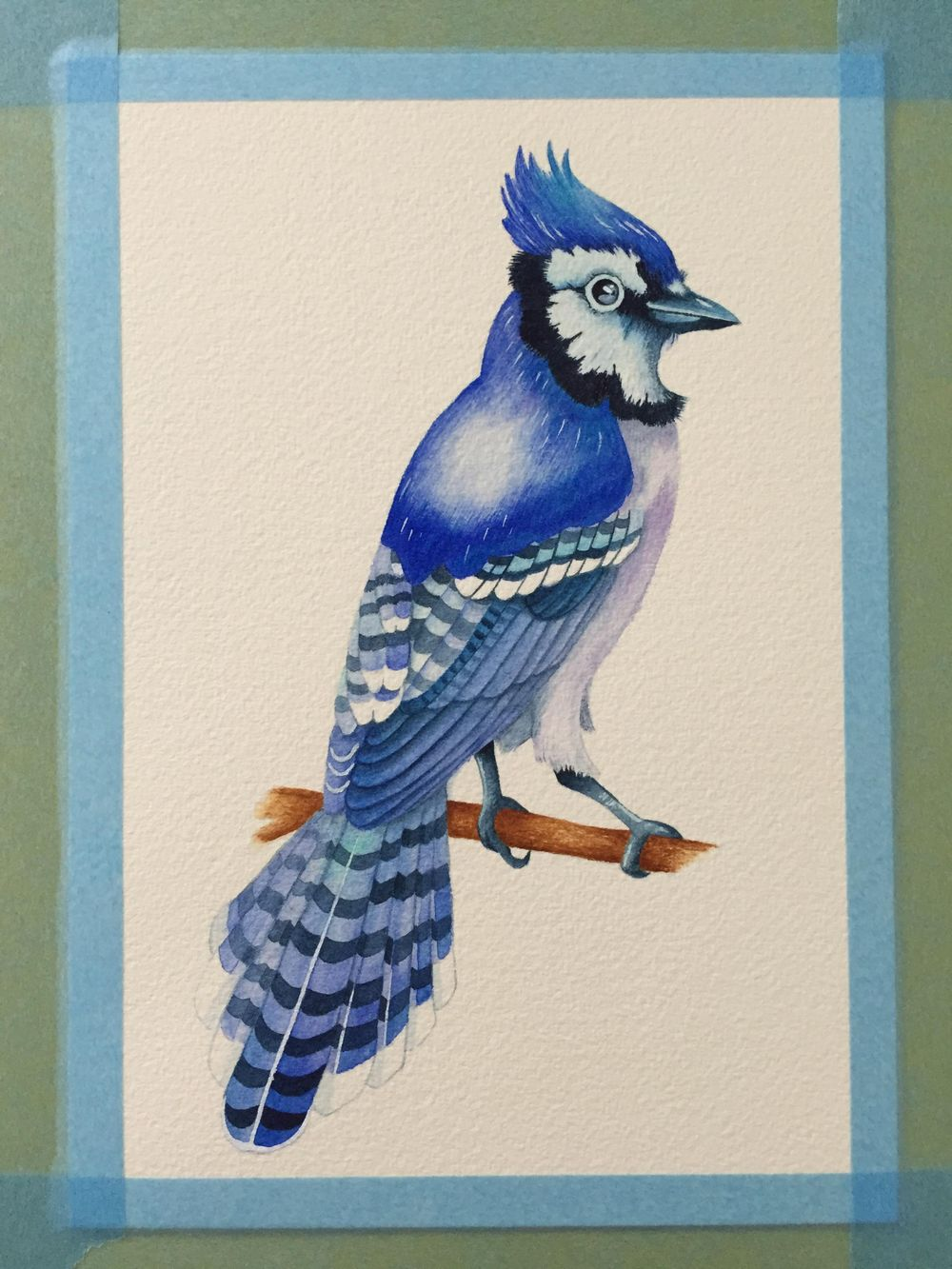 Watercolour Blue Jay - image 6 - student project