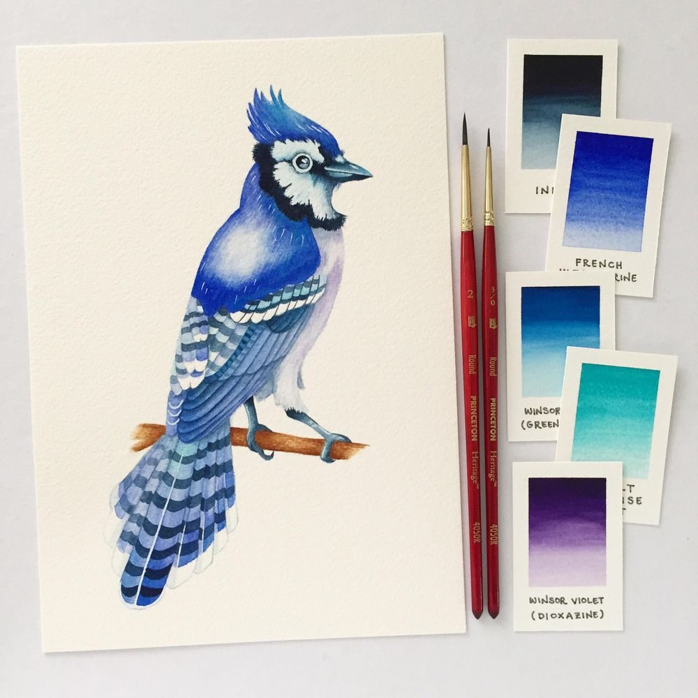 Watercolour Blue Jay - image 7 - student project