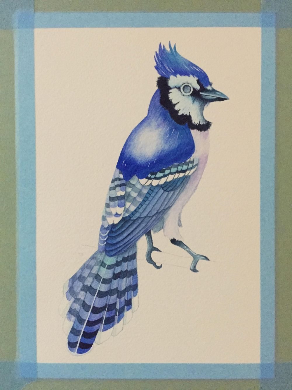 Watercolour Blue Jay - image 5 - student project
