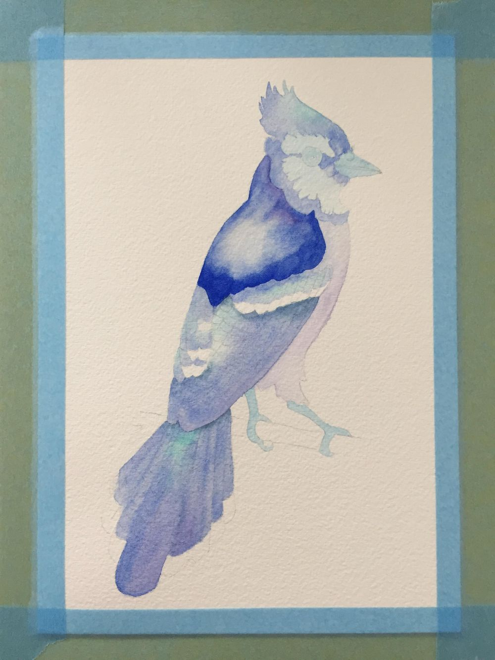Watercolour Blue Jay - image 2 - student project