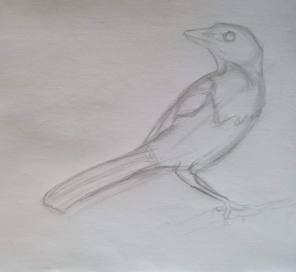 Basic Drawing Skills - image 17 - student project
