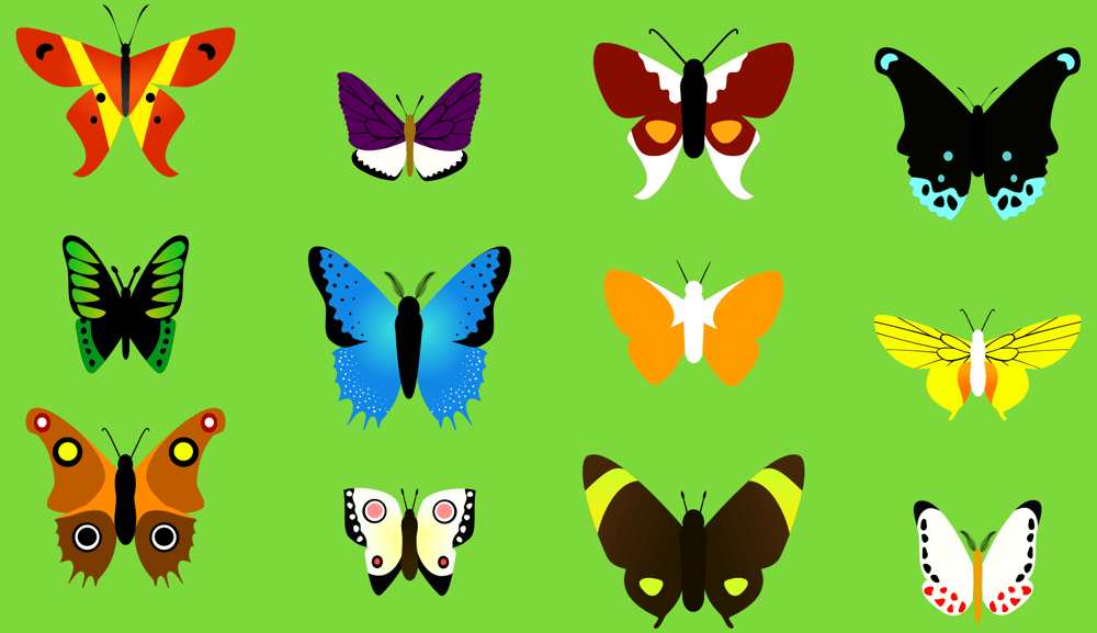 Butterfly collection - image 2 - student project