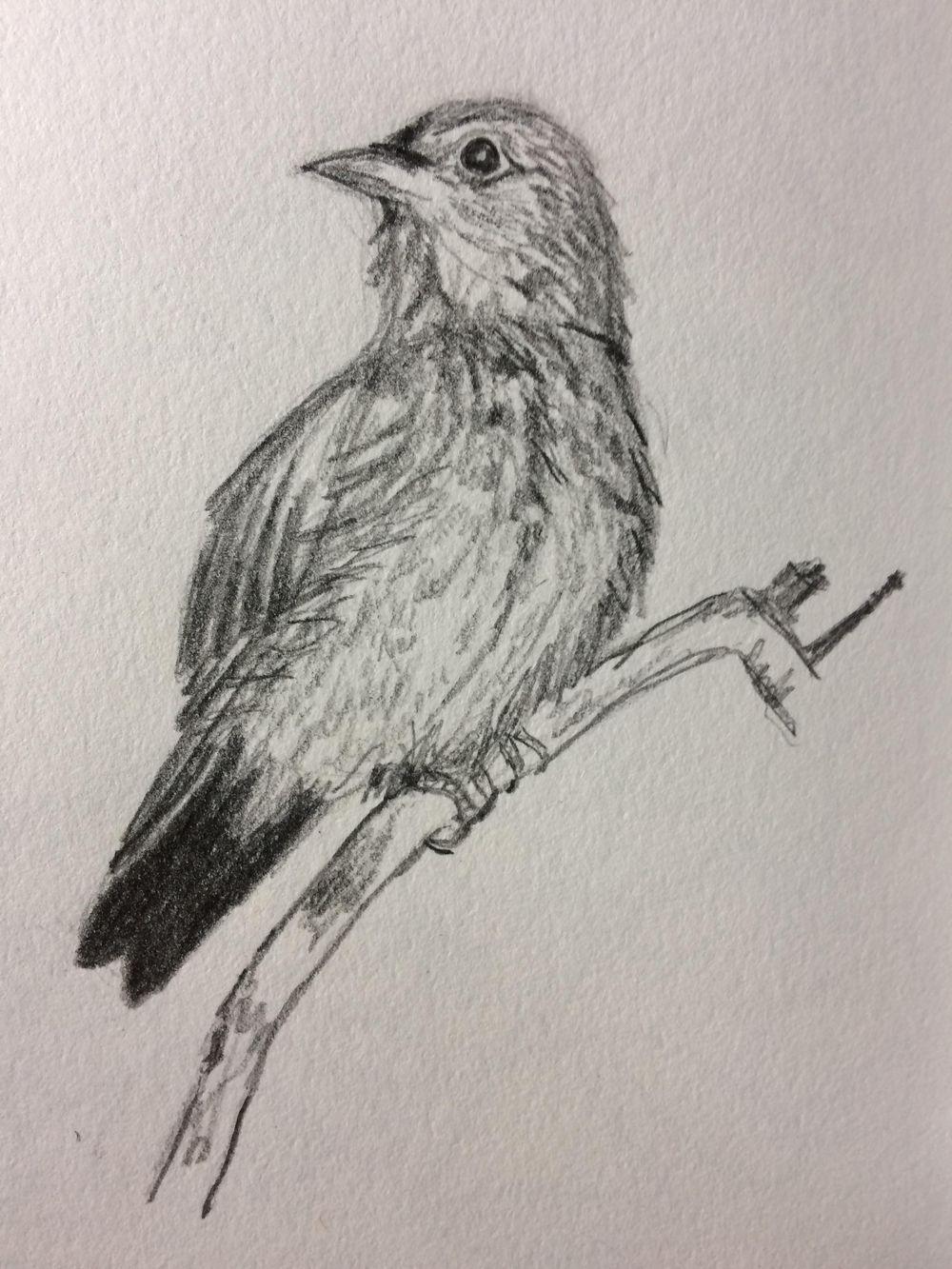 Bluebird - image 2 - student project