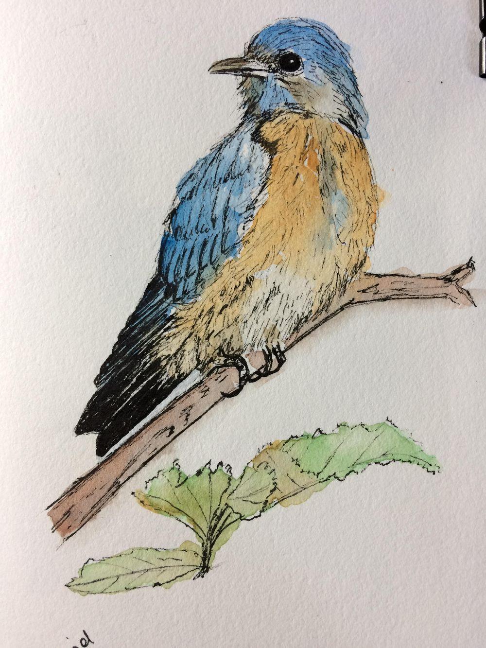 Bluebird - image 3 - student project