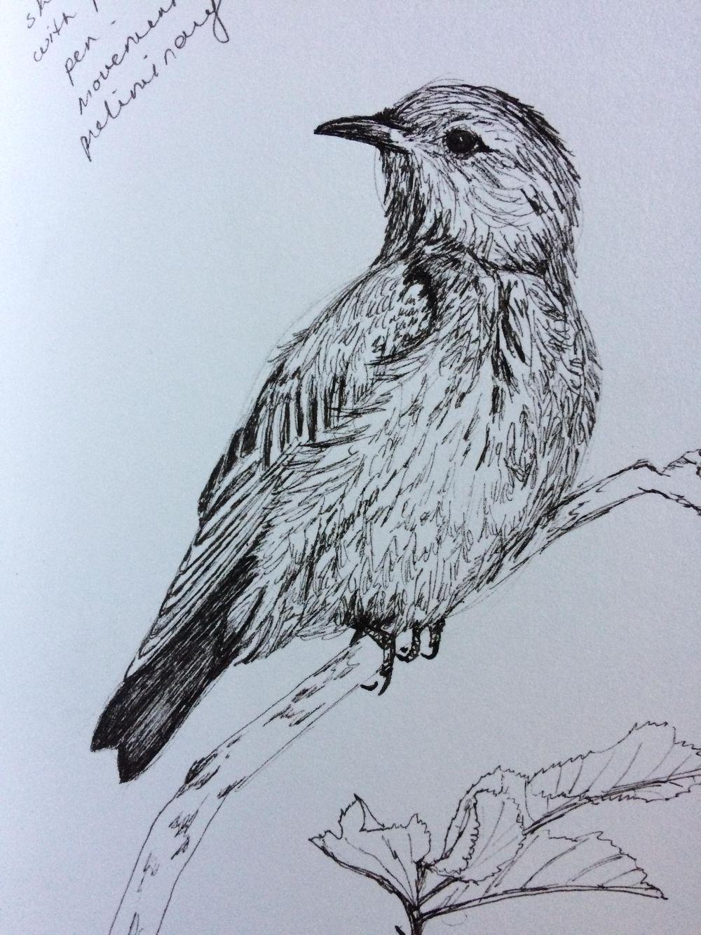 Bluebird - image 1 - student project