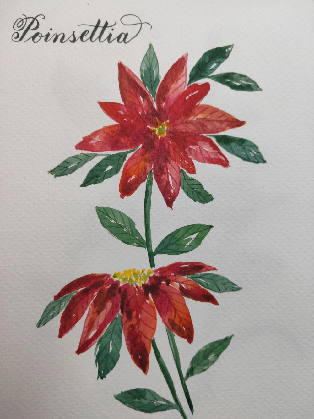 Loose Winter/Christmas Florals - image 2 - student project