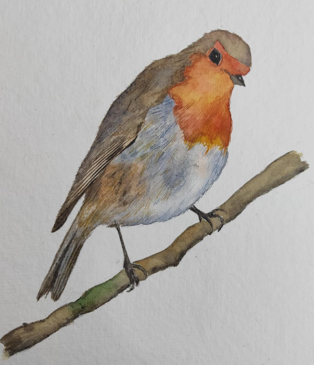Watercolour Robin! - image 1 - student project