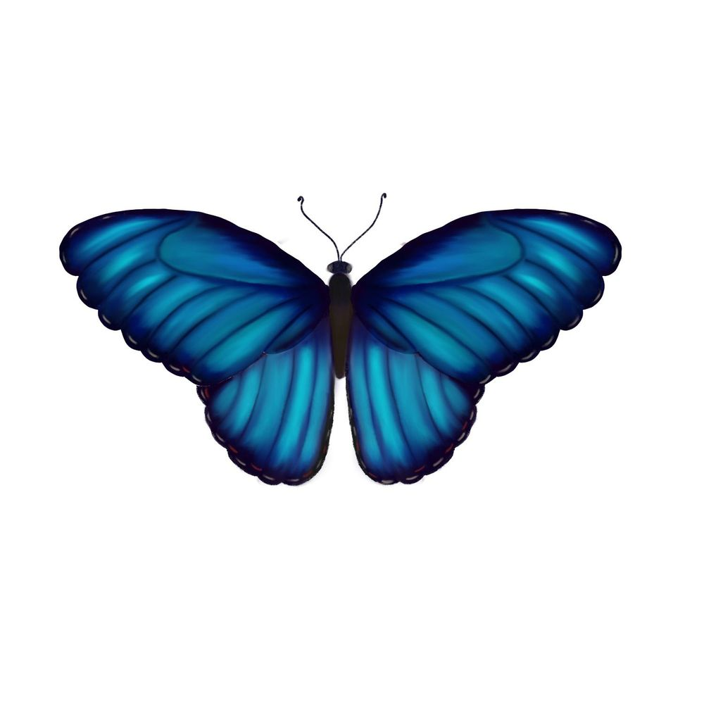 Blue Morpho - image 1 - student project