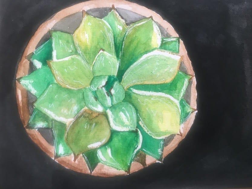 Graphite & Watercolour Succulent - image 1 - student project